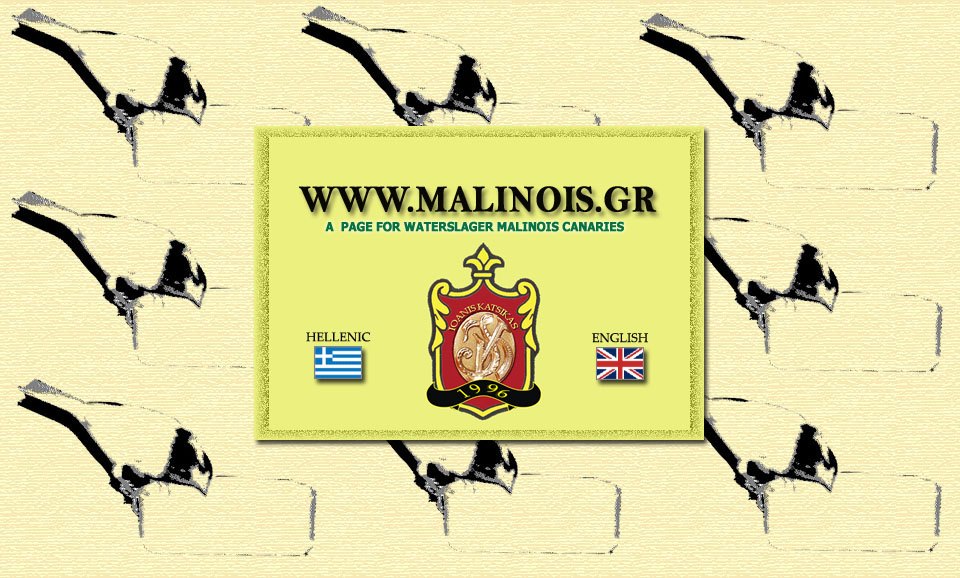 waterslager malinois canaries καναρινια